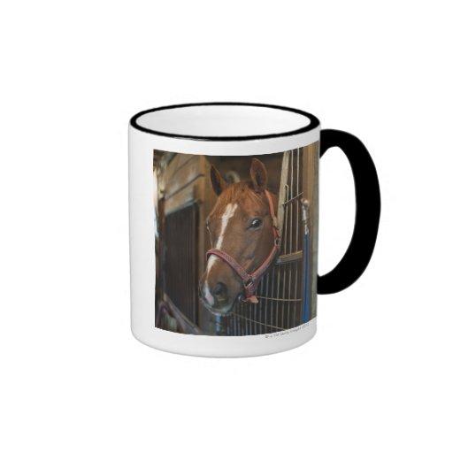 Caballo en parada taza de café