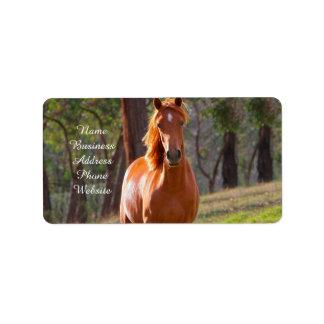 caballo en pasto etiqueta de dirección