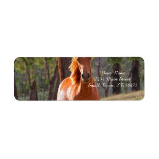 caballo en pasto etiqueta de remite