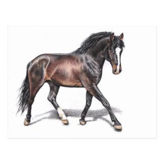 Caballo en Trotas - Horse en Motion Tarjeta Postal