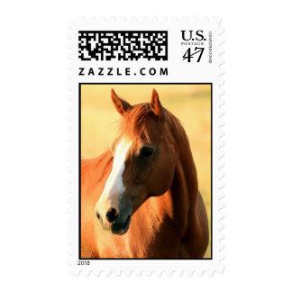 caballo estampilla