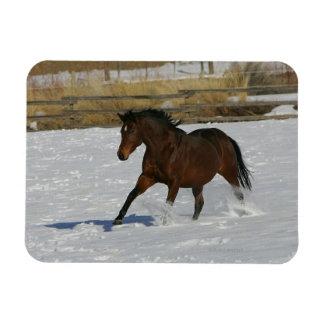Caballo excelente que corre en la nieve imán flexible