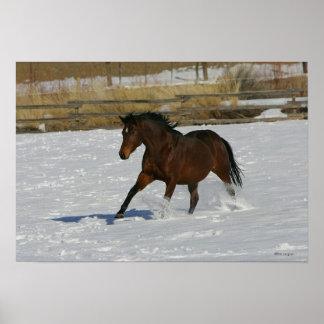 Caballo excelente que corre en la nieve posters