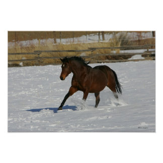 Caballo excelente que corre en la nieve póster