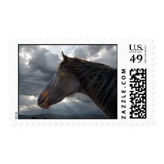 Caballo excelente y cielo tempestuoso sello