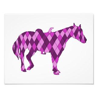 caballo fotografía