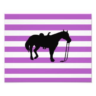 caballo fotografías