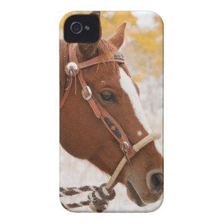 Caballo Case-Mate iPhone 4 Funda