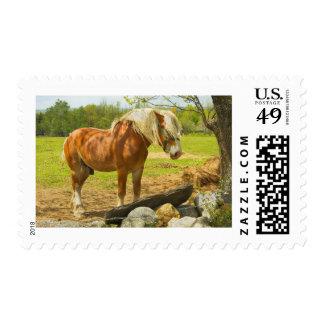 Caballo grande cerca de la pared de piedra en sellos postales