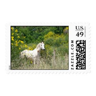 caballo gris en el campo envio
