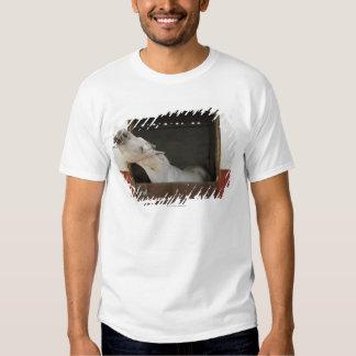 Caballo gris en un establo camisas