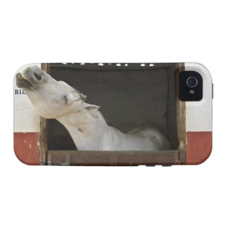 Caballo gris en un establo vibe iPhone 4 carcasas
