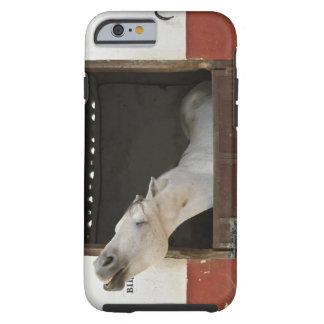 Caballo gris en un establo funda resistente iPhone 6