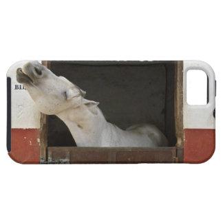 Caballo gris en un establo iPhone 5 carcasas