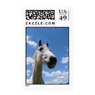 caballo gris envio