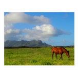 Caballo hawaiano postal