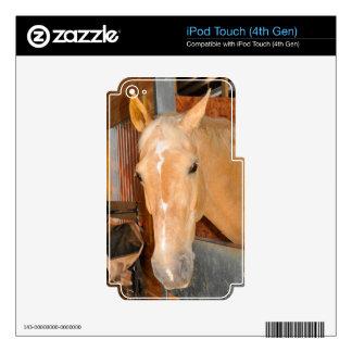 Caballo hermoso iPod touch 4G calcomanías