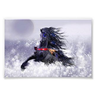 Caballo indio del semental majestuoso azul negro cojinete