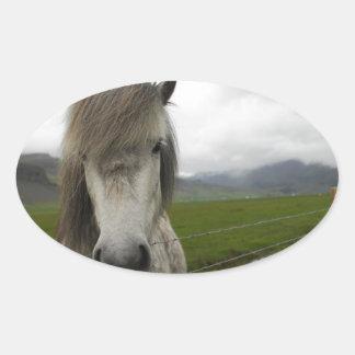 Caballo islandés colcomanias de ovaladas