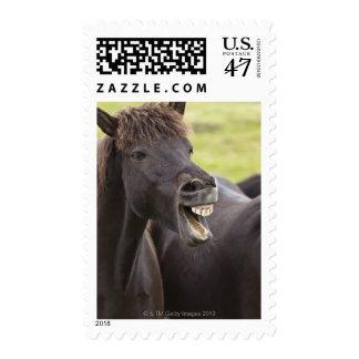 Caballo islandés con la expresión divertida timbre postal