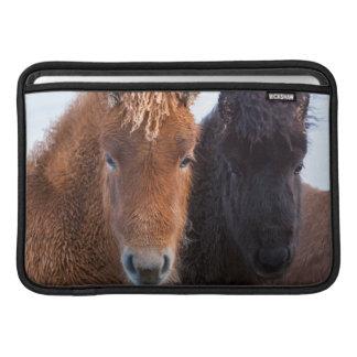 Caballo islandés durante invierno en Islandia 2 Fundas MacBook