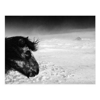 Caballo islandés en desierto del invierno postales