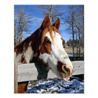 caballo Lengua-atado de la pintura Fotografías