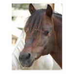 caballo marrón postal