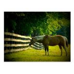 caballo marrón y blanco que pasta la postal