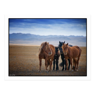 Caballo mongol salvaje, postales del desierto de G