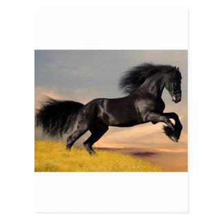 caballo negro en desierto postal