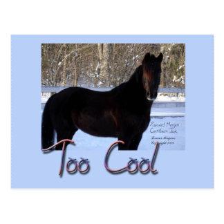 Caballo negro en nieve: Demasiado fresco Postales