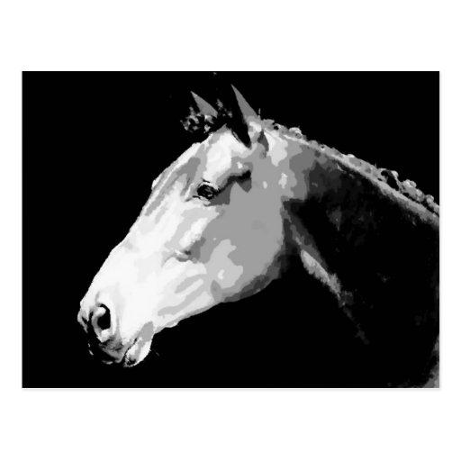 Caballo negro y blanco postal