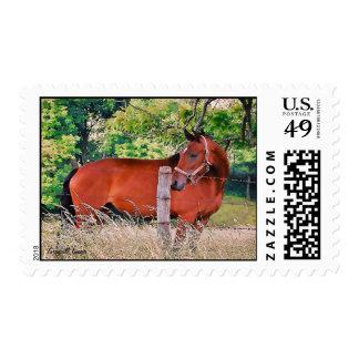Caballo por correo timbre postal