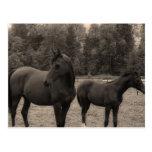caballo postal