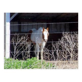 caballo postales