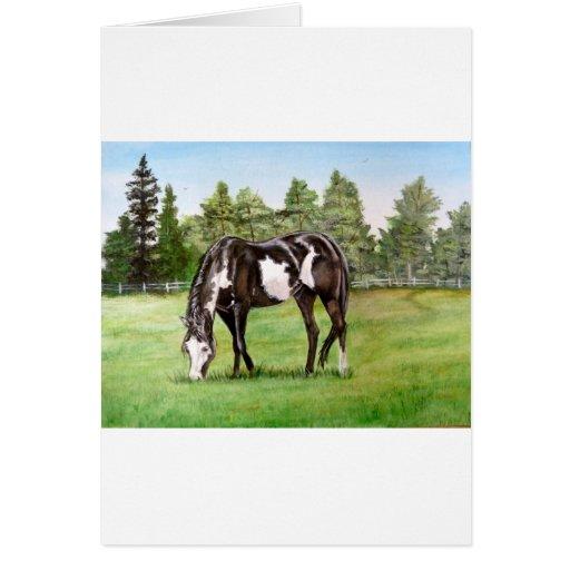 Caballo/potro blancos y negros de la pintura que p tarjeton