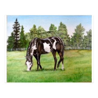 Caballo/potro blancos y negros de la pintura que p tarjeta postal