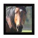 Caballo: Primer grande del caballo de Brown de la  Caja De Recuerdo