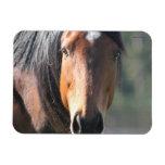 Caballo: Primer grande del caballo de Brown de la  Imanes De Vinilo