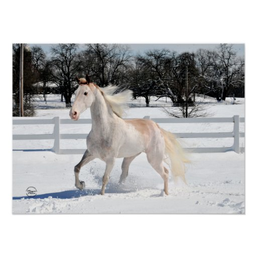Caballo que camina de Tennessee en nieve Póster