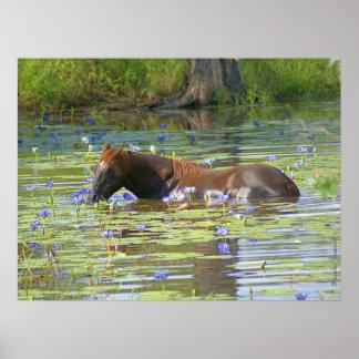 "Caballo que come en el lago, Australia, 24"""" foto Póster"