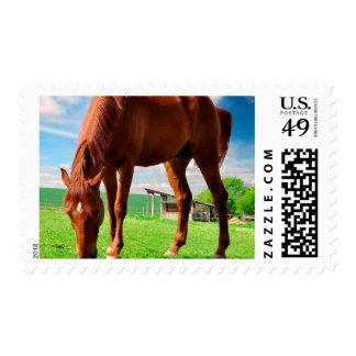 caballo que come la hierba estampillas