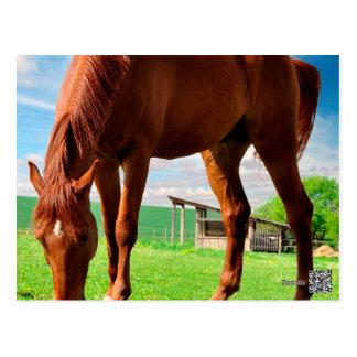 caballo que come la hierba postales