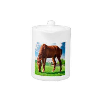 caballo que come la hierba
