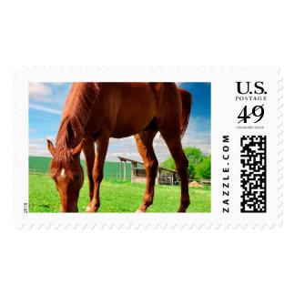 caballo que come la hierba timbre postal