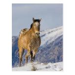 Caballo que corre en la nieve 2 postal