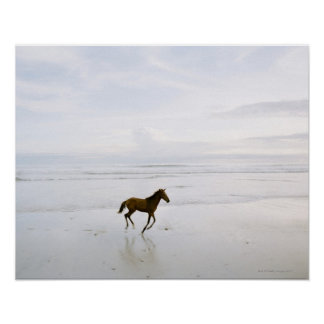 Caballo que corre en la playa posters