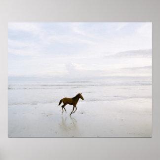 Caballo que corre en la playa póster