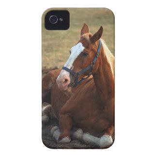 Caballo que descansa sobre la hierba, primer iPhone 4 Case-Mate fundas